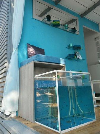 Fish Pedicure Njivice