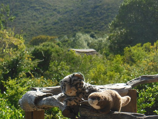 Shamwari Game Reserve Lodges: Its good to get back out in the wild