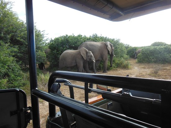 Shamwari Game Reserve, South Africa: Up close with the wildlife, just great