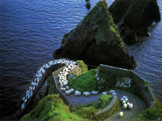 Sheep Highway at Dunquin Pier - one of Ireland's most famous picture postcard locations