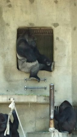 Higashiyama Zoo & Botanical Garden: DSC_0417_large.jpg