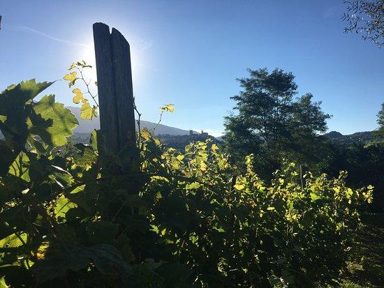 Sarnano, Italia: Villa San Raffaella - Vines and Village