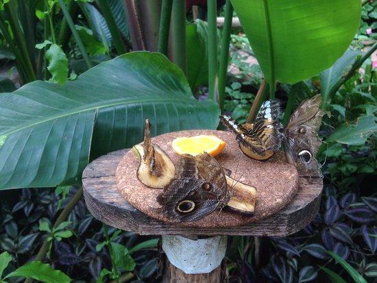 Viagrande, Italia: Casa delle Farfalle