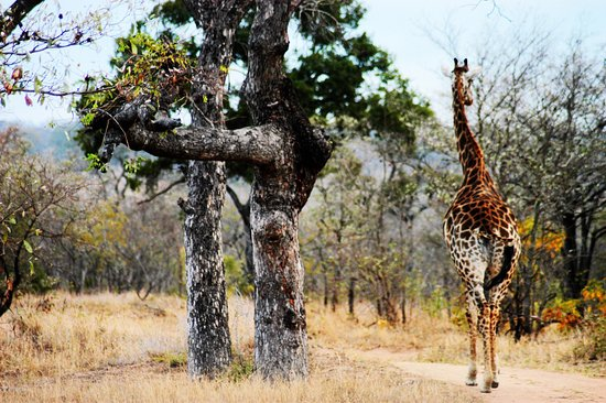 Ulusaba Private Game Reserve, Sudáfrica: photo6.jpg