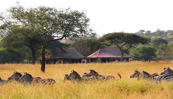 Asanja Africa