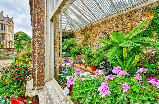 Montacute, UK: The Fern Greenhouse