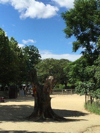 Odaka Green: photo2.jpg