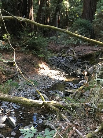 Mill Valley, CA: Forest stream