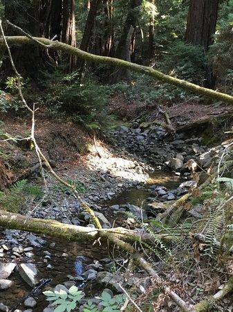 Mill Valley, Californien: Forest stream