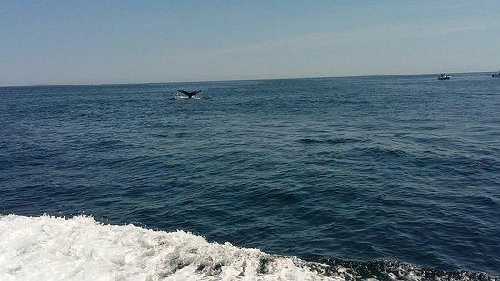 Cape Ann Whale Watch: 20160827_143439_large.jpg
