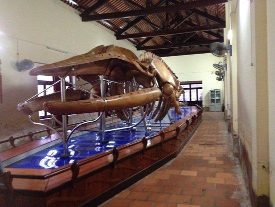 Phan Thiet, Vietnam: Bộ xương cá ông tại dinh Vạn Thủy Tú