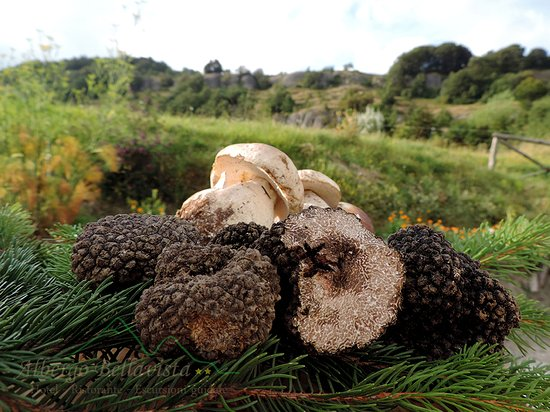 Verghereto, Italia: Funghi e tartufi Bellavista