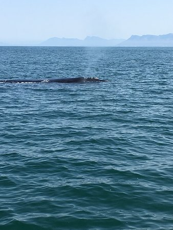 Ivanhoe Sea Safaris: photo1.jpg