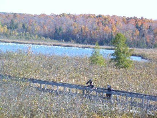 Danville, Canadá: Passerelle pour approcher les oies et les outardes.