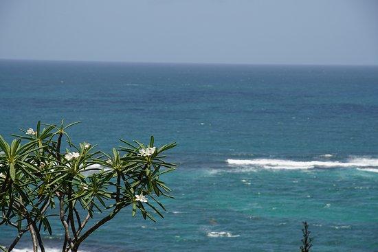 Le Vauclin, Martinik: Fleurs de tiare, avec vue sur la barrière de corail