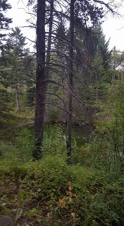 Blairmore, Canadá: View to the water from our back deck