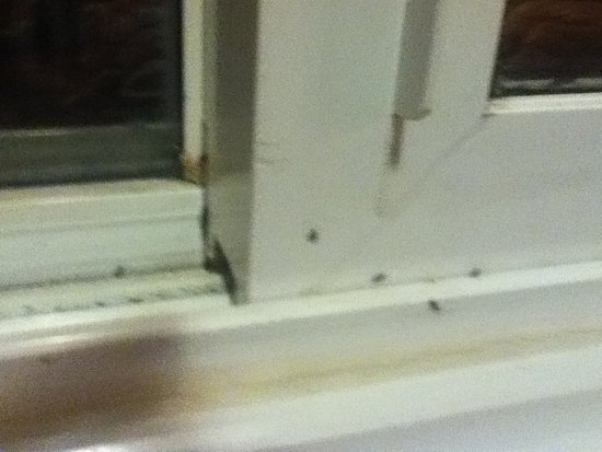 Pleasantview Motel & RV : Ants in room ...this is the inside window ..we kept no food out