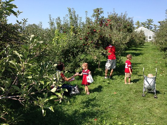 Nebraska City, NE: Apple picking in our Orchards at the Tree Adventure
