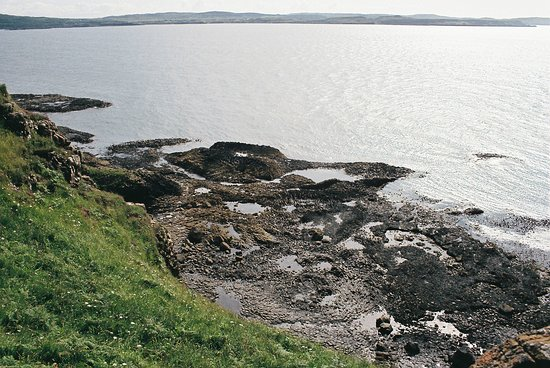 MacCulloch's Fossil Tree: Also on the shoreline the ancient trees are visible.