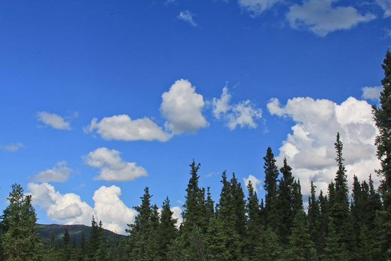 Teklanika River: I had never seen a sky that blue so I grabbed a picture of it. Taken at the TEK campground.