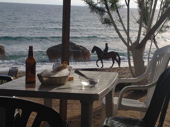 Amaliada, اليونان: Στη παραλία της Μαραθιάς μπορεί αν δεις και άλογα από τον Ιππικό Όμιλο που βρίσκεται εκεί