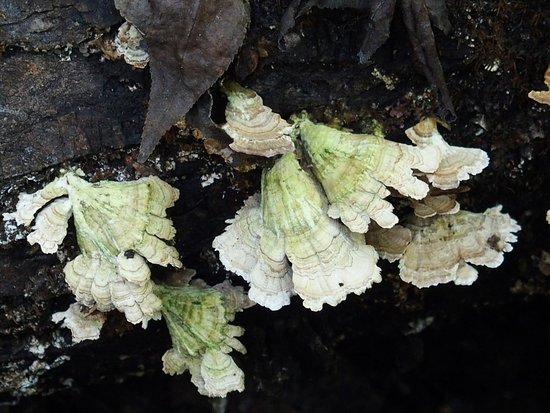 Cosby, เทนเนสซี: Lichens
