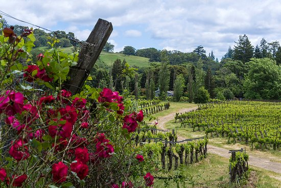 Mendocino County, Kalifornia: Roses Abound in Yorkville