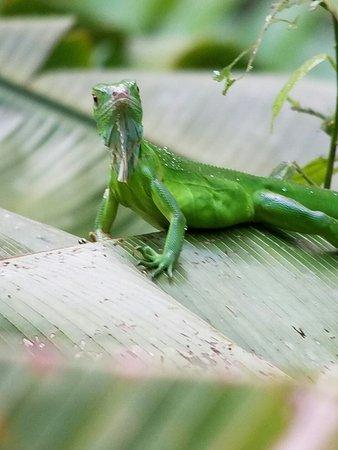 Costa Rica Jade Tours 이미지