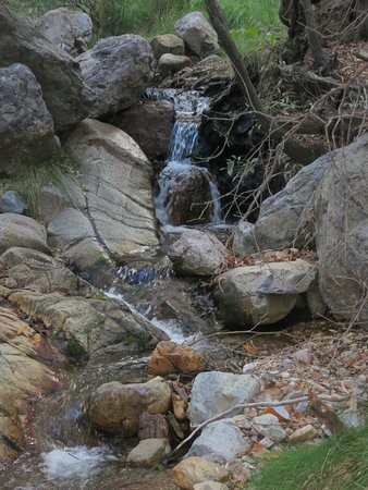 Zdjęcie Madera Canyon