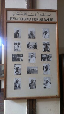 Agricultural Museum: pictures