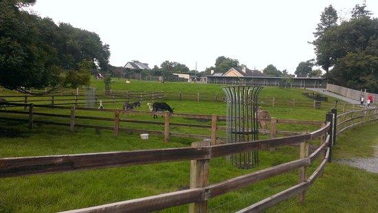 Glendeer Pet Farm