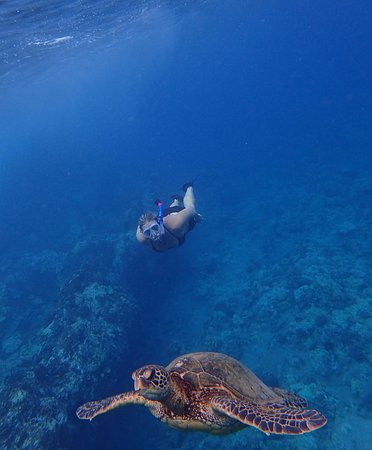 Hawaiian Paddle Sports : Our time swimming with a Turtle!