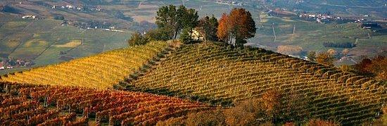 Corneliano d'Alba, Italië: La Langa in autunno