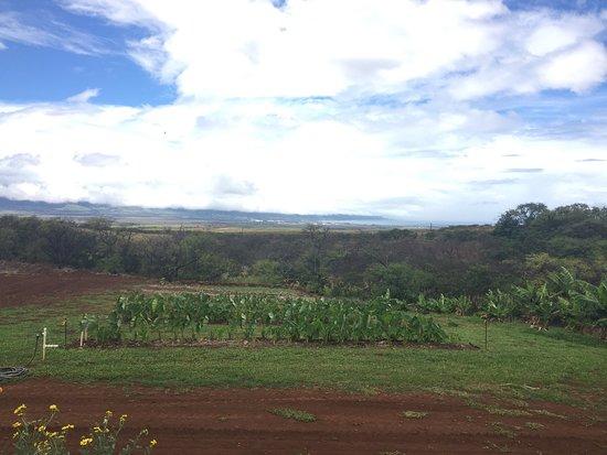 Kula, Hawái: photo0.jpg