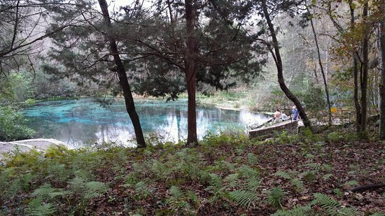 Ichetucknee Springs State Park: THIS IS THE TOP OF THE ITCHETUCKNEE SPRINGS,BREATH TAKING!
