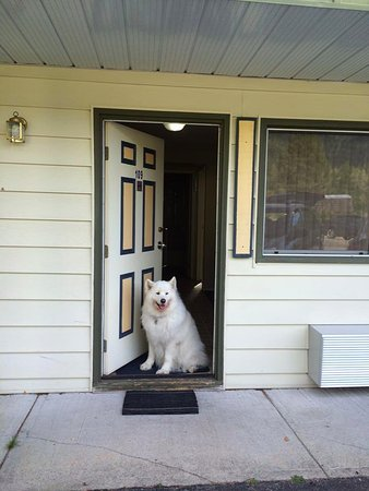 Kokanee Glacier Resort: Photo of our dog in the doorway of our pet-friendly room