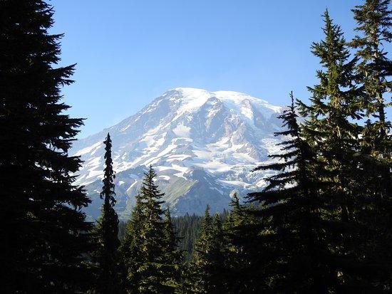 Longmire, WA: Mt Rainier