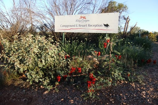 Kings Canyon, Austrália: Note the Sturt's Desert Pea, a beautiful red and black flower