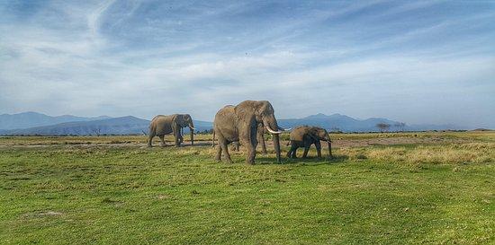 Πλέτενμπεργκ Μπέι, Νότια Αφρική: Ellie Background