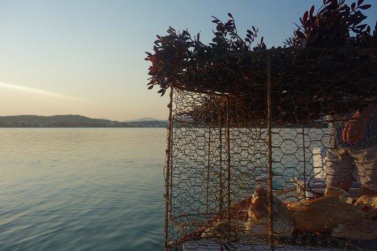 Brodarica, Croacia: vissen met de eigenaar