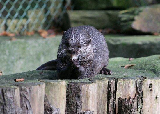 SEA LIFE Timmendorfer Strand: Otter