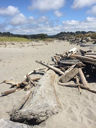 Ilwaco, Etat de Washington : Plenty of driftwood