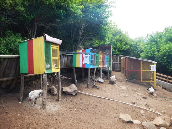 Crochu, Grenada: Chickens and rabbits