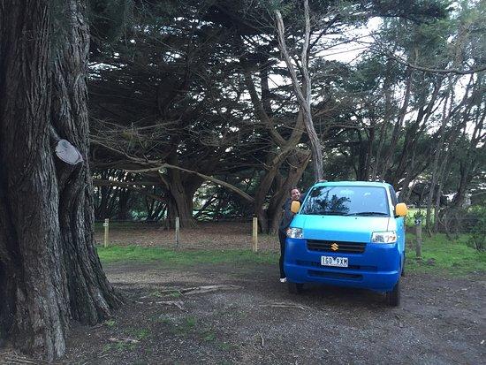 Lorne Foreshore Caravan Park: photo0.jpg