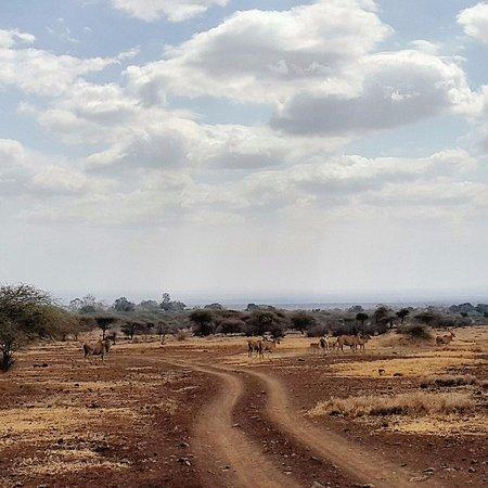 Ndarakwai Ranch Camp: Family of Eland on Ranch