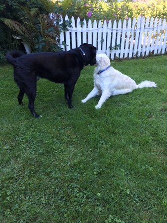 Brandon, VT: Brady playing with his new friend Anthony