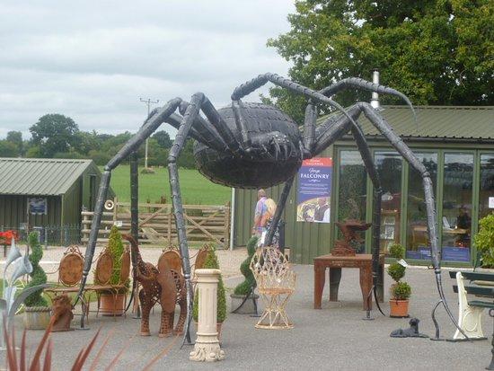 Oswestry, UK: Giant Tarrantula.
