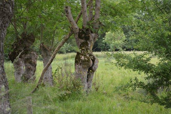 Benet, Francia: sculture naturelle du marais