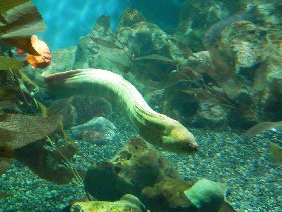 Aquarium of the Bay: Aquarium