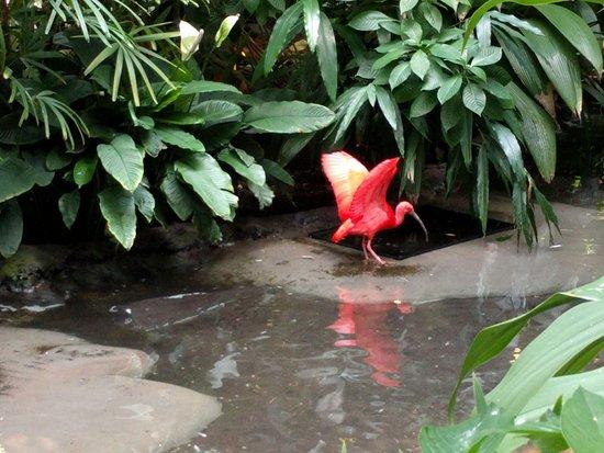 North Carolina Zoo: Red Scarlet